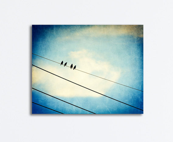 Blue Bird on Wire Canvas Photography by carolyncochrane.com
