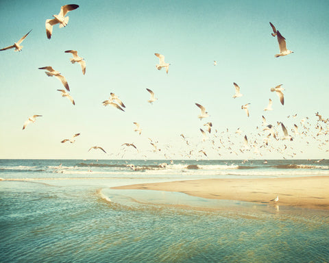 Birds Flying Beach Photography Print by carolyncochrane.com