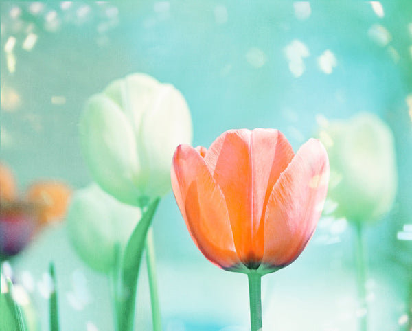 Colorful Tulip Wall Art by carolyncochrane.com