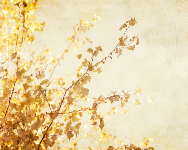 Gold Beige Nature Photography