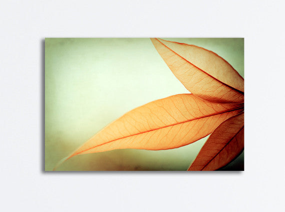 Orange Green Nature Photography Canvas by carolyncochrane.com