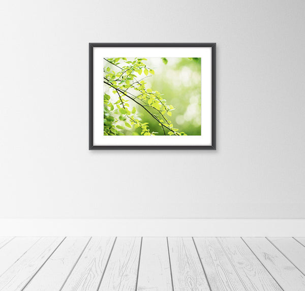 Green Nature Photography Print by carolyncochrane.com