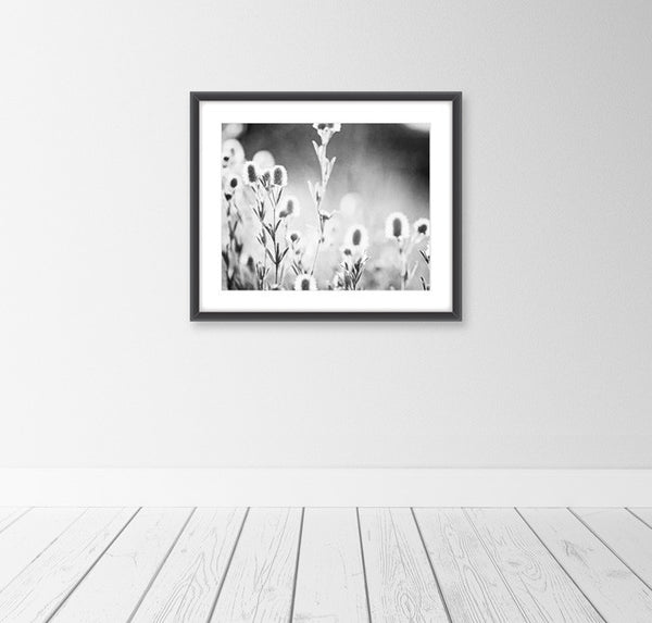 Black and White Nature Photography Print by carolyncochrane.com