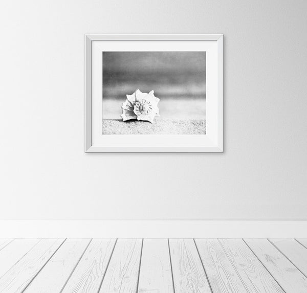 Black and White Beach Photography Art by carolyncochrane.com
