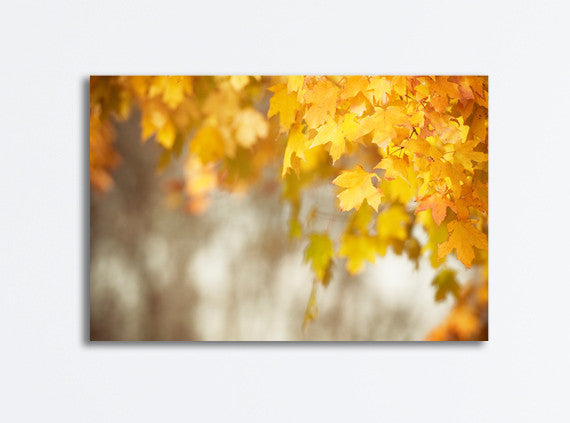 Autumn Leaves Photography by carolyncochrane.com | Orange Yellow Canvas Art