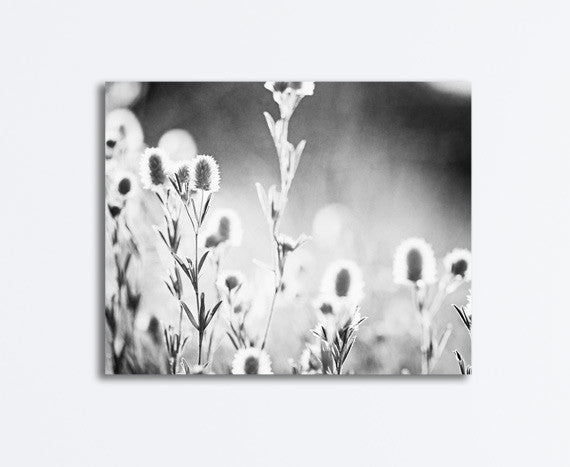 Black and White Nature Photography Canvas by carolyncochrane.com