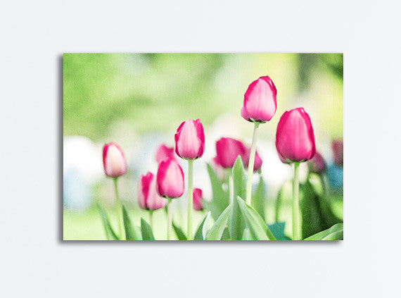 Tulip Photography Canvas by carolyncochrane.com
