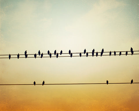 Birds on a Wire Art Photography by carolyncochrane.com
