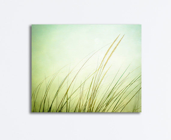 Green Beach Grass Canvas Art by carolyncochrane.com