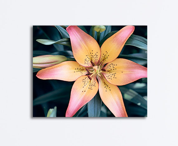 Lily Flower Photography Canvas Art by CarolynCochrane.com