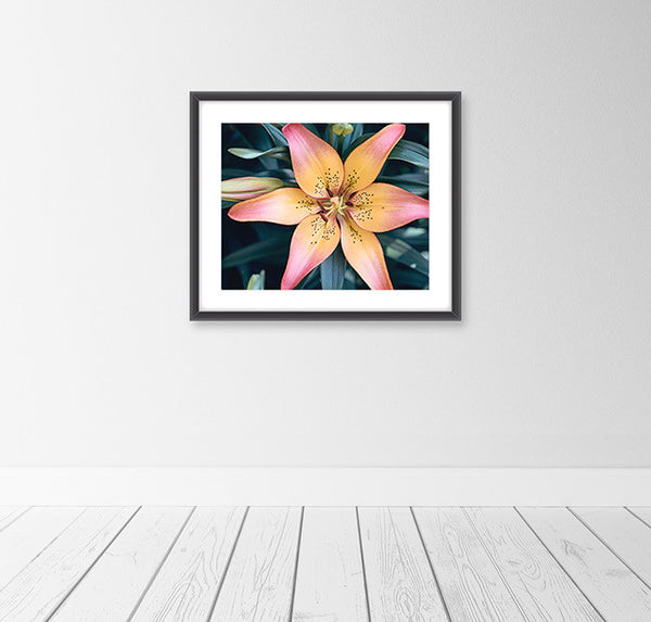 Lily Flower Photography Art Print by CarolynCochrane.com