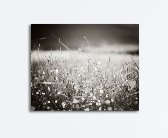 Black and White Dew Canvas by carolyncochrane.com