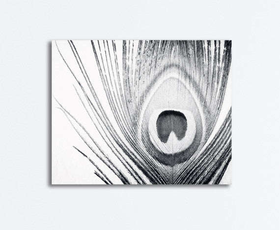 Black and White Peacock Feather Art by carolyncochrane.com