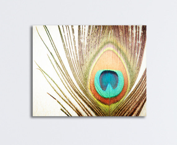 Peacock Feather Photography Art by carolyncochrane.com