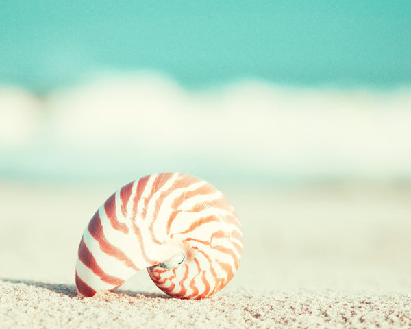 Seashell Photography by carolyncochrane.com