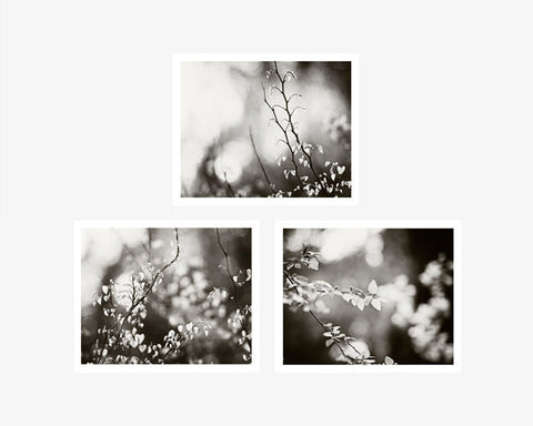 Black and white nature art set of 3