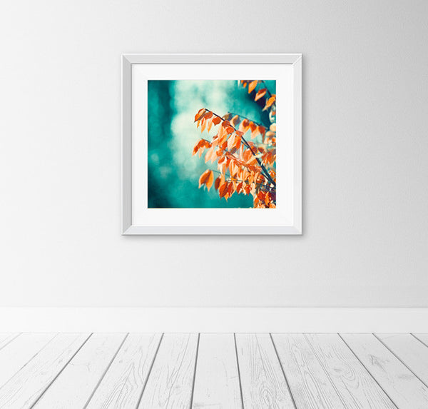 Teal Orange Nature Photography Print by carolyncochrane.com