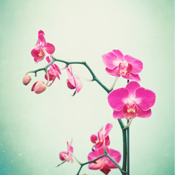 Pink Orchid Photography by carolyncochrane.com