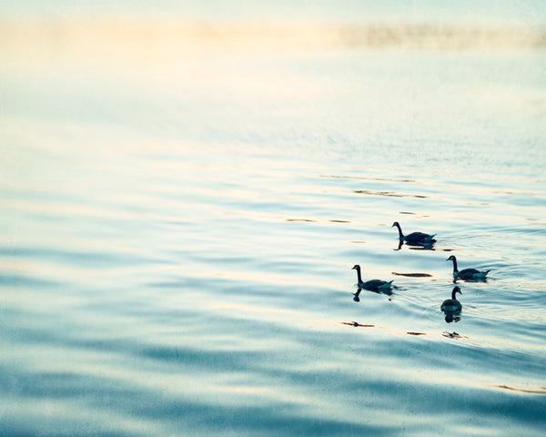 Birds in Water Photography by carolyncochrane.com