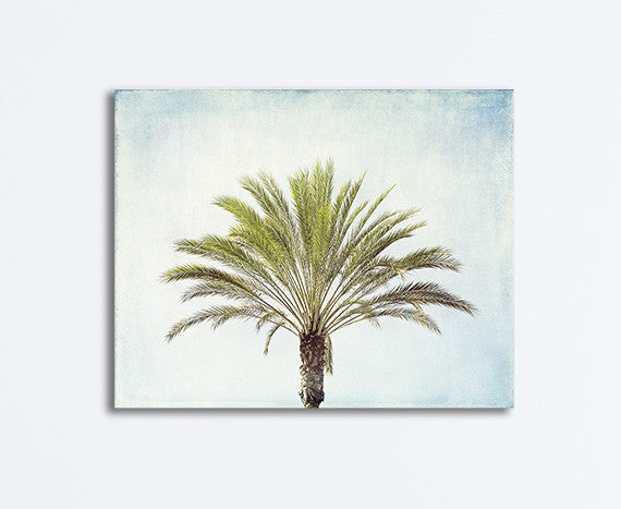 Palm Tree Canvas Photography Art by Carolyn Cochrane | Beach Wall Print