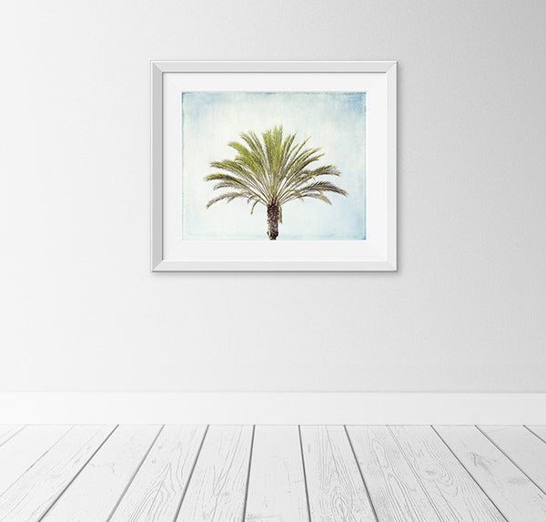 Palm Tree Photography Art by Carolyn Cochrane | Beach Photograph