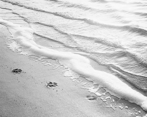 Black White Beach Photography by carolyncochrane.com
