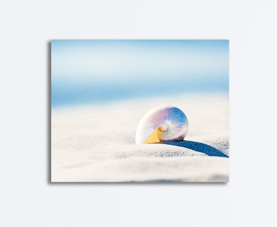 Sea Shell Photography Art by carolyncochrane.com