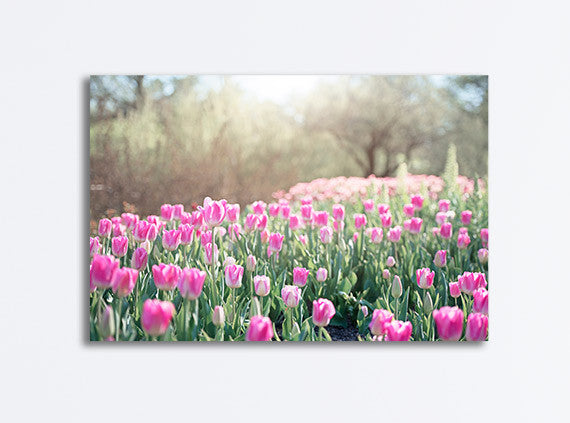 Pink Tulip Meadow Photography Canvas Art by CarolynCochrane.com