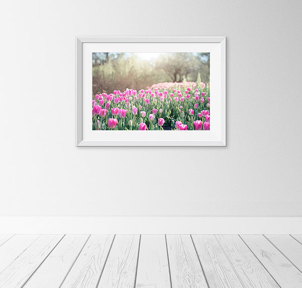 Pink Tulip Meadow Photography Art by CarolynCochrane.com
