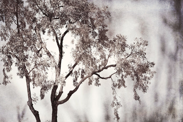 Black and White Tree Photography carolyncochrane.com