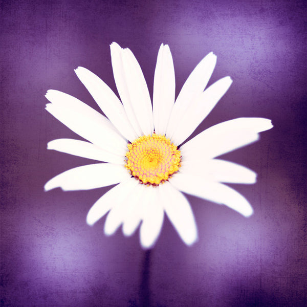 Purple White Flower Art by carolyncochrane.com