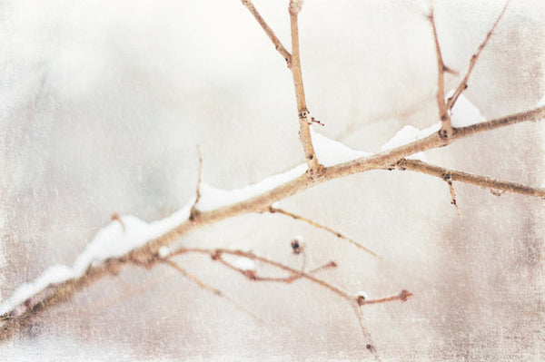 White Winter Photography by carolyncochrane.com