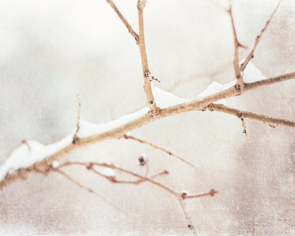Winter Nature Decor by carolyncochrane.com