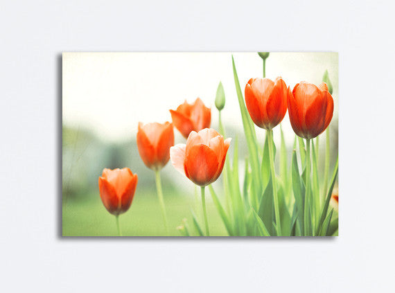 Red Tulip Canvas Photography by carolyncochrane.com