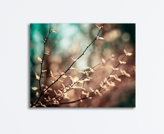 Brown Teal Nature Canvas by carolyncochrane.com