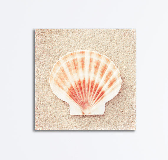Scallop Shell Art Photography by carolyncochrane.com