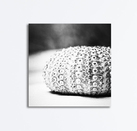 Black and White Seashell Canvas by carolyncochrane.com