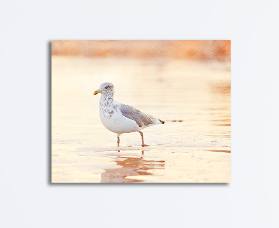 Seagull on Beach Photography Canvas by CarolynCochrane.com