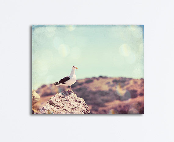 California Beach Photography by Carolyn Cochrane | Seagull on Coast Canvas Art