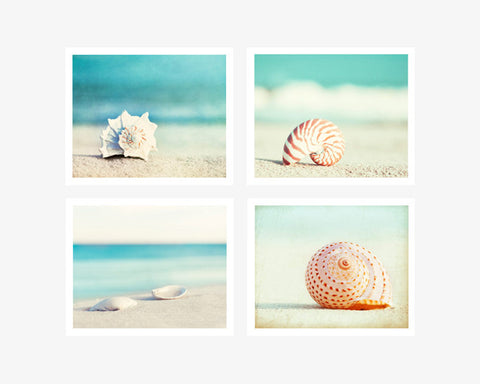 Seashell Photography Set by carolyncochrane.com