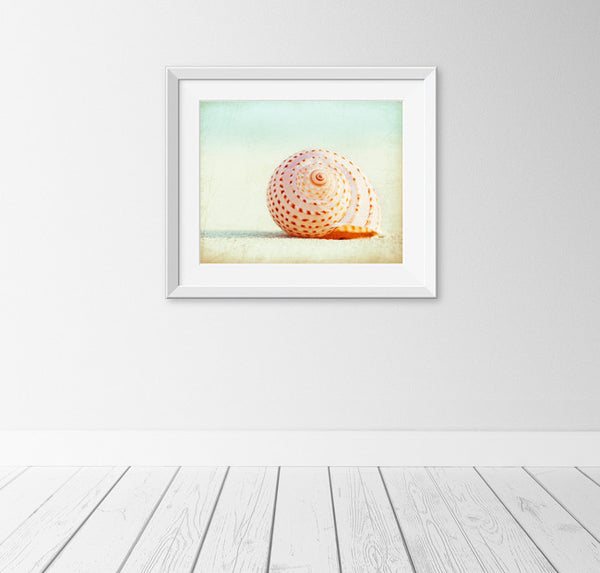 Seashell Wall Decor by carolyncochrane.com