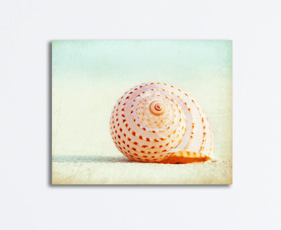 Seashell Wall Canvas Decor by carolyncochrane.com