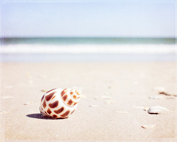 Seashell on Beach Photography Art by CarolynCochrane.com
