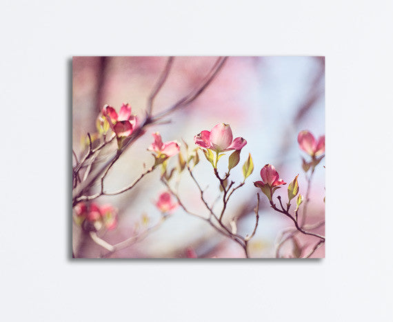 Pink Dogwood Canvas by carolyncochrane.com