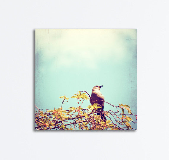 Bird on Branch Canvas Art by carolyncochrane.com