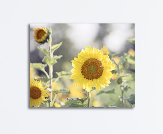 Sunflower Photography Canvas by carolyncochrane.com