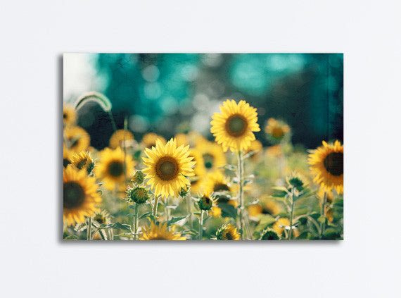 Teal Yellow Sunflower Canvas by carolyncochrane.com
