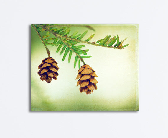 Pinecone Photography Canvas by carolyncochrane.com