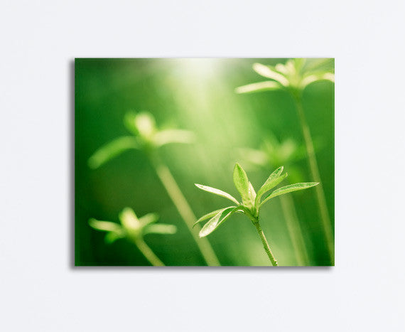 Green Nature Photography Canvas Art by carolyncochrane.com