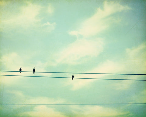 Mint Bird on Wire Photography by carolyncochrane.com